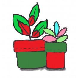 Plant Pot Holder Kit - Red/Green